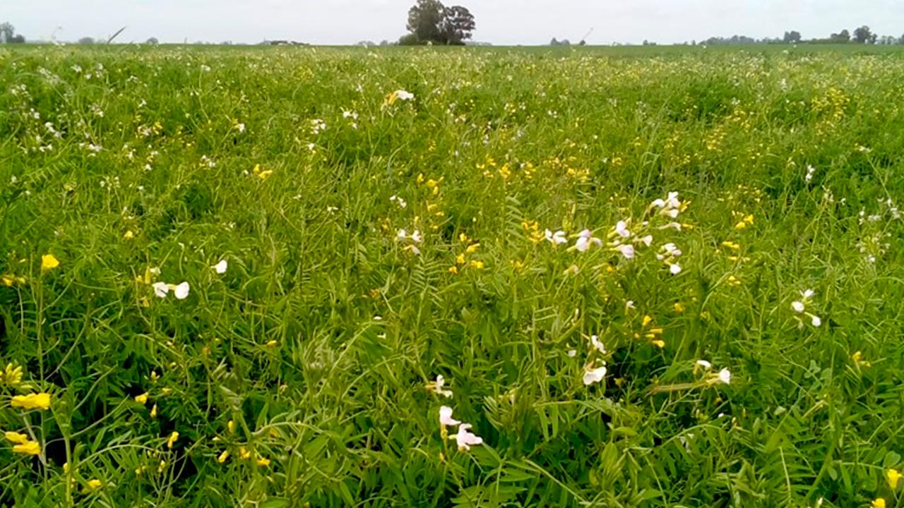 malezas-cultivos-asesoragro-1-1280x720.png